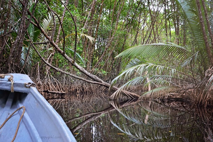 cherrating mangrove cruise