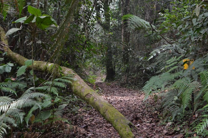 mager trail in frasers hill