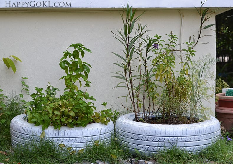 plants in tires 3