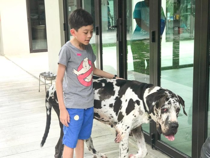 Learn about cats and dogs at the SPCA - Happy Go KL